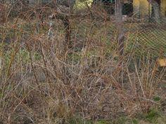 Sokunk kedvenc gyümölcse a málna. Bevallom nálam is a ranglista elején található. A helyes fajtaválasztással elérhetjük, hogy több hónapon ... Wood, Plants, Woodwind Instrument, Timber Wood, Trees, Plant, Planets