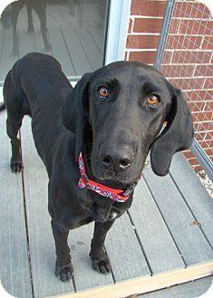 Adopt a Pet :: Lila - Smyrna, GA - Labrador Retriever Mix