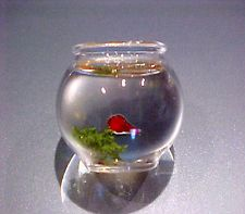Dollhouse Phil Grenyer Handcrafted Glass Goldfish Bowl Doll House Miniatures