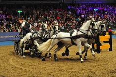 """Awesome """"tow horses for shows"""" info is available on our site. Olympia Horse Show, Best Boats, Live Fish, Power Boats, Animals Of The World, Best Location, Show Horses, Water Crafts, Deep Sea"""