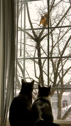 In honor of Squirrel Appreciation Day, which falls on January of every year, let's take a closer look at the hilarious way that cats are also fascinated with these bushy-tailed creatures. Cute Cats, Funny Cats, Funny Animals, Cute Animals, Crazy Cat Lady, Crazy Cats, Squirrel Appreciation Day, Sneak Attack, Cat Window