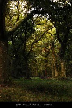 Forest- Stock Streamy by streamy-stock.deviantart.com