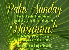 Check out an awesome collection of Happy Palm Sunday Images Easter Sunday Pictures, Quotes Bible Verses & Palm Sunday Messages Cards Wishes Greetings. Sunday Messages, Sunday Wishes, Sunday Greetings, Wishes Messages, Holiday Messages, Sunday Bible Verse, Psalm Sunday, Palm Sunday Quotes Jesus, Blessed Sunday