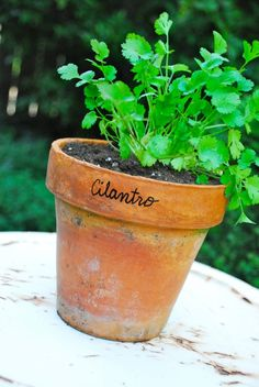 Use a Sharpie paint pen to write herb names directly on the pot.