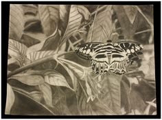 "Charcoal on Sketch paper. 24"" x 18""  Artist: Kathleen Knowling"