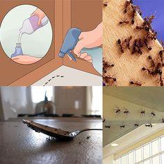 Είναι συχνό φαινόμενο να αντιμετωπίζουμε το πρόβλημα της εμφάνισης μυρμηγκιών στο σπίτι μας, ιδιαίτερα το καλοκαίρι και αναζητούμε τρόπους και συμβουλές για απαλλαγούμε απο αυτά. Μια έρευνα του Πανεπιστημίου Στανφορντ έδειξε ότι ο βασικός λόγος που Alternative Treatments, Home Recipes, Organization Hacks, Holidays And Events, Ants, Clean House, Housekeeping, Cleaning Hacks, Diy And Crafts