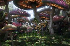 paddenstoelen