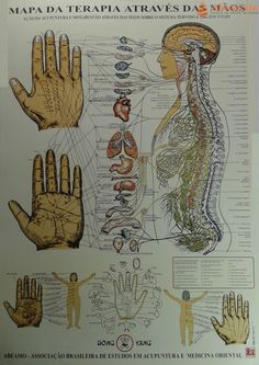 kim mapa de acupuntura atraves das maos 115-045.jpg 500×707 píxeles