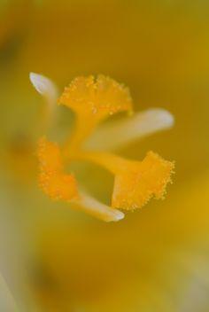 Nur eine Blüte