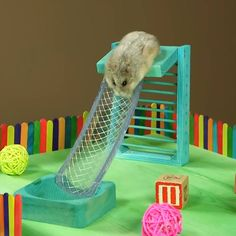 These dwarf hamsters live in a tiny mansion! It was made by April Campbell using a dollhouse, and she documents her animals' adventures on social media. Habitat Du Hamster, Dwarf Hamster Toys, Hamster Bin Cage, Cool Hamster Cages, Robo Hamster, Gerbil Cages, Best Hamster Cage, Diy Hamster House, Hamster Live