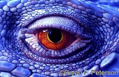 Image detail for -21: A Lizard Eye Becomes a Photo of a Dragon - 7 Photography ...