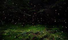 #IntoTheWoods #Nature #Ellie Davies #Woods