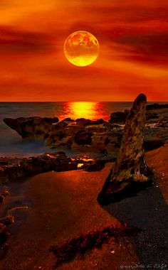 Glorious moonrise over rocks and driftwood on Hutchinson Island off the coast of Martin and St. Lucie counties in Florida • photo: Justin Kelefas / HDR Customs
