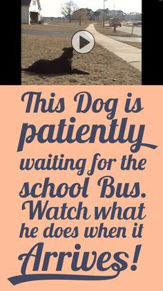 This dog is patiently waiting for the school bus... Watch what he does when it arrives!!