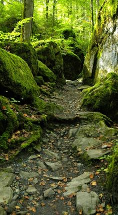 My inner landscape, I couldn't walk by without feeling the softness of the moss.....