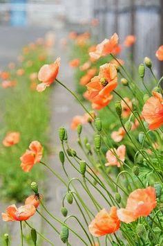 Beautiful Flower ❥Teresa Restegui http://www.pinterest.com/teretegui/❥