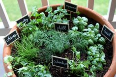Container Herb Garden: A great idea for those without actual garden space. I love the placemarkers, too!