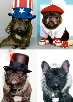 'Fashion Plates', French Bulldog as Fashion Icon.