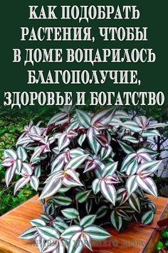 Plant Cuttings, Small Farm, Small Gardens, Good Advice, House Plants, Helpful Hints, Flora, Sweet Home, Fun
