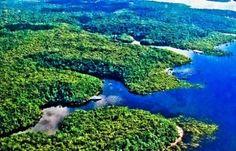 Conheça a Floresta Amazônica