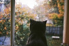The Little Hermitage - immortal-autumn: black cat on We Heart It. Autumn Cozy, Film Aesthetic, Summer Aesthetic, Character Aesthetic, Im Waiting For You, Film Photography, Daydream, Aesthetic Pictures, Cats And Kittens