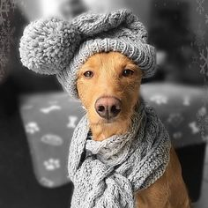 Winter's A Styling I #fortheloveofdog