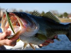 How to Catch Largemouth Bass - Winter Jerkbait Bass Fishing Tips - Lake Fork Bass Fishing Report - YouTube