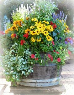 Most Beautiful Container Gardening Flowers Ideas For Your Home Front Porch . 15 Most Beautiful Container Gardening Flowers Ideas For Your Home Front Porch . 15 Most Beautiful Container Gardening Flowers Ideas For Your Home Front Porch . Flower Garden, Patio Garden, Plants, Lawn And Garden, Backyard Garden, Beautiful Flowers, Wine Barrel Garden, Container Gardening, Garden Containers