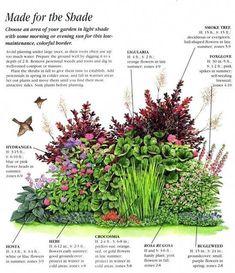 Shade Garden Plants, Garden Shrubs, Shaded Garden, Garden Planters, Diy Garden Projects, Garden Ideas, Flower Garden Plans, Small Garden Plans, Landscaping Jobs