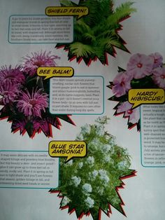 Plants for the yard: HGTV mag