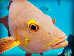 Great Barrier Reef - Moore reef