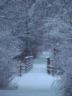 Winter White Portal