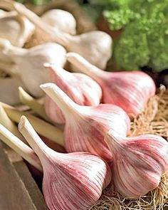 Organic garlic is good for you.  Leeny: True, n it tastes good too!