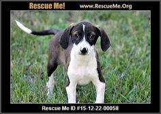 FLORIDA POINTER RESCUE - New Smyrna Beach, FL Rescue Animals More