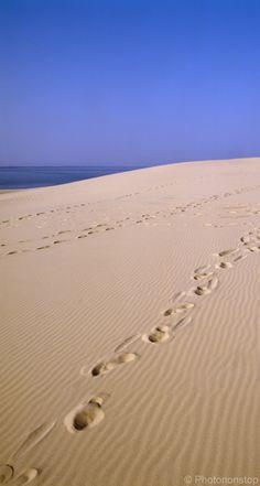 (Fait) Ballade sur la Dune du Pilat