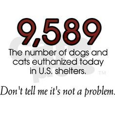 Is the number real? Unfortunately, yes. Derived from the HSUS most recent annual statistic of dogs and cats put to sleep in US shelters. Nearly 10,000 per day. Don't tell me it's not a problem ✿⊱╮