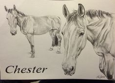 Sketch on A5 horse Portrait