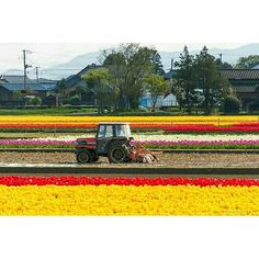 Reposting @jerfareza: A tulip field in Niigata. Taken in April 2017 . . #flower #tulip #niigata #japan #beautiful #travel #outdoors #flowerfield #nature #photooftheday #scenery #jalanjalan #instadaily #一眼レフ #spring #bestjapanpics #discoverjapan