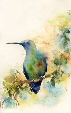 Hummingbird Original Watercolor Painting, painting of bird, bird wall art, watercolour art, bird on a branch by CanotStop on Etsy