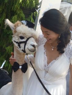 YESSSSSS! I'm having a Llama at my wedding! Fo sheezzz. OMG. someone marry me already!?! I want Llllaaammmaaaassss.