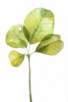 Easy watercolor painting of leaves. Good for practicing shading when trying your hand at water colours. Art And Illustration, Watercolor Illustration, Illustrations, Watercolor Leaves, Watercolour Painting, Painting & Drawing, Watercolors, Illustration Botanique, Arte Floral