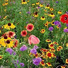 Best Perennials for Wisconsin and Midwest climates |