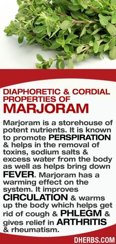 Marjoram is a storehouse of potent nutrients. It is known to promote perspiration , helps in the removal of toxins, sodium salts , excess water from the body as well as helps bring down fever. Marjoram has a warming effect on the system. It improves circulation , warms up the body which helps get rid of cough , phlegm , gives relief in arthritis , rheumatism.