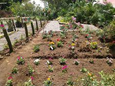 Dominica gardens