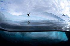amazing antartic-photo