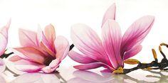 Magnolia - Cinthia Ann