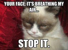 Top 10 Funniest Summer Grumpy Cat Memes, Vote For Your Favorite Summer Grumpy Cat Meme!