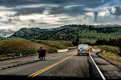 #옐로스톤 #흔한풍경 #yellowstone #bison #풍경 #photogram #바이슨 #yellowstonenationalpark #맞팔환영 #팔로 #맞팔 #사진스타그램 #동물 #소 #자연 #놀라움 #photoshoot #landscapes #미국여행 #미국국립공원 #미국관광청 #usanationalparks