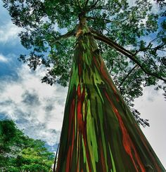 Umetničko drvo duginih boja