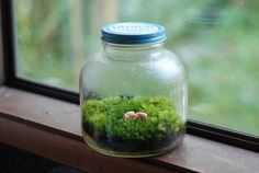 terrarium - do not put in west or south windows - the light is too bright and hot. Near those windows, it should be ok if the terrarium is shaded by a lace or light curtain - never in direct sun. East and north are best.